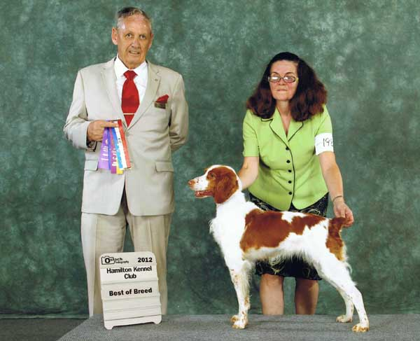 Brittany Spaniel, Jess gets Best of Breed