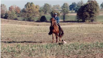 training a Brittany from horseback at field trial grounds