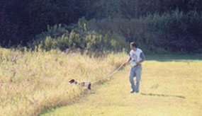 training a Brittany with a checkcord at Luther Marsh